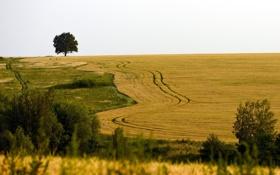 Обои пейзаж, поле, дерево