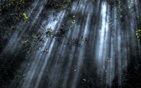 Картинка лес, свет, ветки, природа