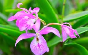 Обои листья, растение, орхидея, природа, лепестки, макро