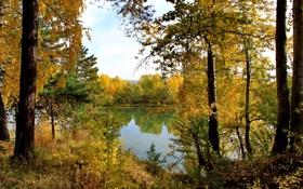 Обои осень, лес, река, деревья.