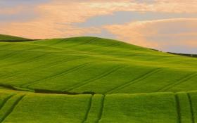 Обои зелень, поле, трава, фото, холмы, пейзажи, поля