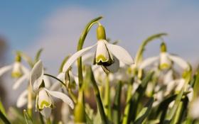 Картинка белый, Цветы, весна, насекомое