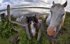 Картинка фон, забор, кони