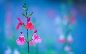 Картинка природа, краски, растение, стебель, соцветие
