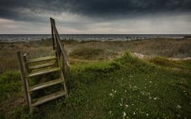 Обои трава, луг, крыльцо, by Robin de Blanche, Tomorrow