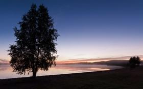 Картинка небо, деревья, туман, сумерки