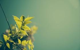 Обои растение, листья, зеленые