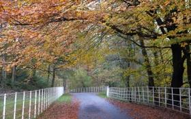 Картинка дорога, осень, пейзаж, забор