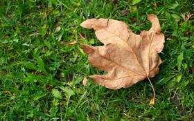 Картинка трава, макро, лист, сухой, зеленая
