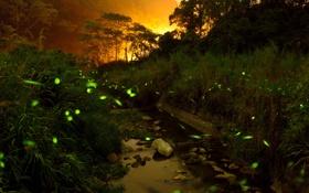 Картинка лес, свет, горы, ночь, светлячки, ручей, камни