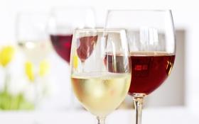 Обои стекло, вино, красное, белое, бокалы