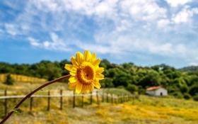 Картинка небо, листья, деревья, цветы, желтый, дом, фон
