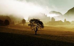 Обои деревья, туман, дерево, ферма, сопки