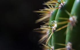 Обои зеленый, темный фон, капля, кактус, колючки, шипы