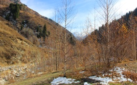 Обои снег, горы, желтый, елки, Осень, березы