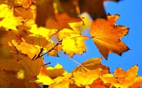 Картинка осень, небо, листья, макро, ветка