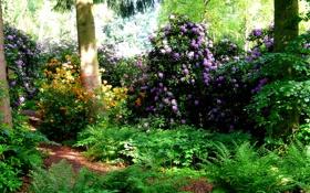 Обои трава, зелень, Park Seleger Moor, кусты, деревья, рододендрон, парк