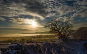 Обои fog, snow, morning, tree, туман, снег, утром