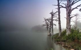 Картинка деревья, пейзаж, природа, туман, озеро
