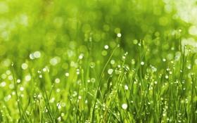 Обои трава, капли, макро, роса, блики, боке