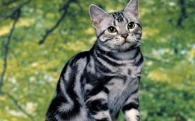 Обои кошка, лето, полосатик