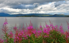 Картинка горы, небо, озеро, тучи, цветы