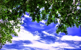 Картинка небо, листья, облака, ветки, дерево