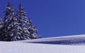 Обои снег, деревья, снежинки, ель, фокус, размытость, искры