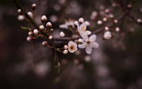 Обои цветы, весна, листочки