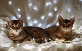 Обои кошки, гирлянды, белый фон