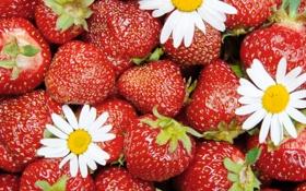 Картинка цветы, ягоды, клубника, красные, fresh, спелая, strawberry