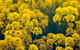 Обои лето, макро, цветы, цветки, flowers, macro, тебли