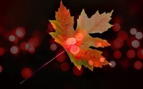 Обои осень, лист, краски, блик