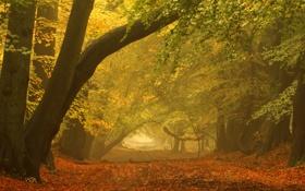Обои пейзаж, осень, парк