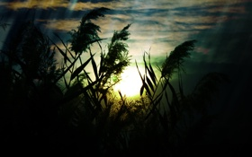 Обои природа, поле, трава, обои, фото