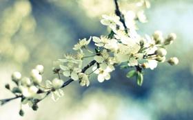 Обои небо, макро, свет, цветы, вишня, ветка, весна
