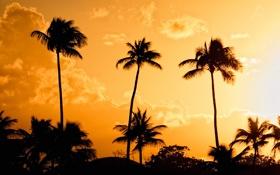 Обои свет, закат, оранжевый, желтый, пальмы, вечер, пуэрто рико