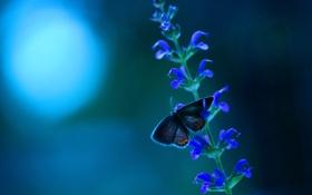 Обои макро, природа, бабочка, цветочки