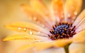 Картинка цветок, капли, макро, желтый