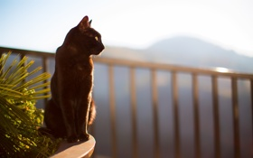 Картинка кошка, кот, черная, сидит