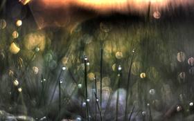 Обои трава, капли, закат, роса, блик