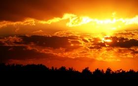 Обои солнце, деревья, природа, фото, пейзажи