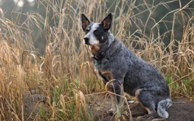 Картинка взгляд, природа, собака