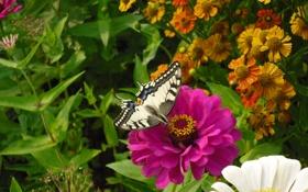 Обои цветок, лето, бабочка