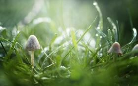 Картинка трава, капли, макро, зеленый, роса, грибы