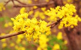 Картинка цветы, желтый, дерево, весна, цветение