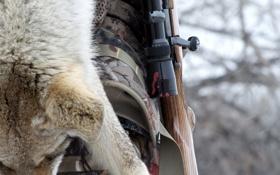 Картинка gun, blood, fox, hunting