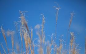 Обои осень, небо, трава, макро, растение
