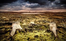 Обои поле, небо, пейзаж, природа