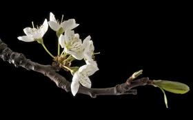 Картинка цветы, дерево, ветка, весна, сад